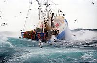Alaska fishing pollock, trawling in the Bering Sea