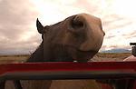 A NOSY HORSE IN BEAVERHEAD MONTANA