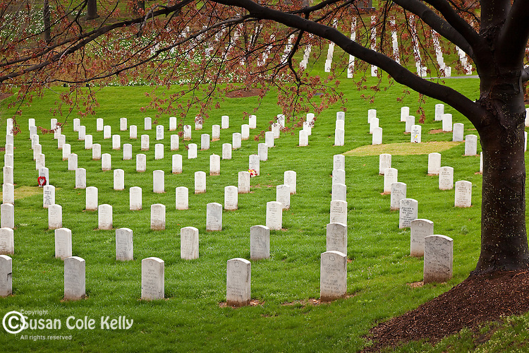 Rows of memorial stones in Arlington National Cemetery, Arlington, VA, USA