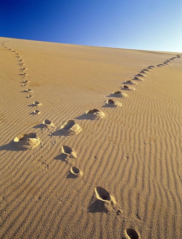 Footprints up sand dune. Oregon Dunes National Recreational Area.