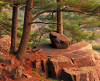 White pine trees on East Bluff Devil's Lake State Park Baraboo Hills Wisconsin
