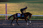 November 4, 2020: Devilwala, trained by trainer Ralph M. Beckett, exercises in preparation for the Breeders' Cup Juvenile Turf at Keeneland Racetrack in Lexington, Kentucky on November 4, 2020. Gabriella Audi/Eclipse Sportswire/Breeder's Cup/CSM