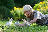 Junge, Kind spielt mit jungen Hühnerküken, Küken im Garten, Zwerghuhn, Zwerghühner, glückliche Hühner, freilaufende Hühner, artgerechte Tierhaltung, Landidylle, Idylle