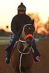 Firenze Fire, trained by trainer Kelly Breen, exercises in preparation for the Breeders' Cup Sprint at Keeneland Racetrack in Lexington, Kentucky on November 4, 2020.