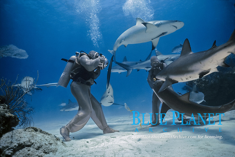 Photographer photographing face of Caribbean Reef Shark (Carcharhinus perezii), Bahamas - Caribbean Sea.
