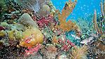 Coral reef, Islamorada, Florida Keys, Florida