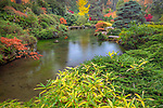 Kubota Garden, Seattle, WA: One of the ponds in Kubota Gardens with autumn textures and colors.