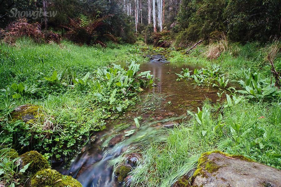 Image Ref: CA577<br /> Location: Lake Elizabeth, Forrest<br /> Date of Shot: 20.10.18