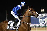 March 27, 2021: EQUITRAAN (IRE), #4 in the post parade for the Dubai Turf on Dubai World Cup Day, Meydan Racecourse, Dubai, UAE. Shamela Hanley/Eclipse Sportswire/CSM