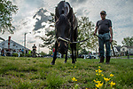 Instilled Regard at Churchill Downs in preparation for the 144th Kentucky Derby.