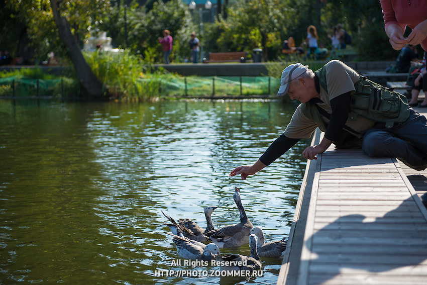 Old man feeding  ducks on the pond in Gorky park, Moscow, Russia