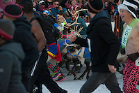 Competitors dodge hooves and antlers during the 7th Annual Fur Rendezvous Running of the Reindeer in downtown Anchorage, Alaska.