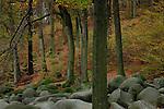 Europa, DEU, Deutschland, Hessen, Odenwald, Bergstrasse, Lautertal-Reichenbach, Geo-Naturpark Bergstraße-Odenwald, Naturschutzgebiet Felsberg, Felsenmeer, Felsformationen, Herbst, Kategorien und Themen, Natur, Umwelt, Landschaft, Jahreszeiten, Stimmungen, Landschaftsfotografie, Landschaften, Landschaftsphoto, Landschaftsphotographie, Naturschutz, Naturschutzgebiete, Landschaftsschutz, Biotop, Biotope, Landschaftsschutzgebiete, Landschaftsschutzgebiet, Oekologie, Oekologisch, Typisch, Landschaftstypisch, Landschaftspflege<br /> <br /> [Fuer die Nutzung gelten die jeweils gueltigen Allgemeinen Liefer-und Geschaeftsbedingungen. Nutzung nur gegen Verwendungsmeldung und Nachweis. Download der AGB unter http://www.image-box.com oder werden auf Anfrage zugesendet. Freigabe ist vorher erforderlich. Jede Nutzung des Fotos ist honorarpflichtig gemaess derzeit gueltiger MFM Liste - Kontakt, Uwe Schmid-Fotografie, Duisburg, Tel. (+49).2065.677997, archiv@image-box.com, www.image-box.com]