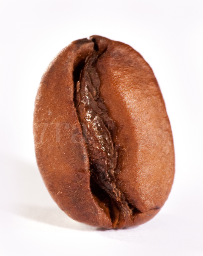 Single Coffee Bean front view vertical