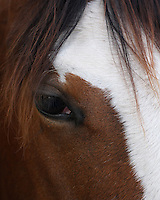 """""""I praise the Lord for her, and her eye! She is so kind, and yet picks up on everything around her. Her senses are sharp."""" (Jolene Hardy McCord, owner)."""