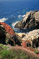 Pinnacle Cove rocky cliff with Pacific Ocean surf zone in background. California, Point Lobos State Reserve.