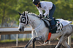 SHA TIN,HONG KONG-DECEMBER 09: Smart Layer,trained by Ryuji Okubo,exercises in preparation for the Hong Kong Vase at Sha Tin Racecourse on December 9,2016 in Sha Tin,New Territories,Hong Kong (Photo by Kaz Ishida/Eclipse Sportswire/Getty Images)