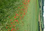 Europa, DEU, Deutschland, Hessen, Osthessen, Rhoen, Landkreis Fulda, Hofbieber, Naturpark Hessische Rhoen, Biosphaerenreservat Rhoen, Sommer, Mohnbluete, Kategorien und Themen, Natur, Umwelt, Pflanzen, Pflanzenkunde, Botanik, Biologie, Natur, Naturfoto, Naturfotos, Naturfotografie, Naturphoto, Naturphotographie, Landschaft, Landschaften, Landschaftsfoto, Landschaftsfotografie, Landschaftsphoto, Landschaftsphotographie<br /> <br /> [Fuer die Nutzung gelten die jeweils gueltigen Allgemeinen Liefer-und Geschaeftsbedingungen. Nutzung nur gegen Verwendungsmeldung und Nachweis. Download der AGB unter http://www.image-box.com oder werden auf Anfrage zugesendet. Freigabe ist vorher erforderlich. Jede Nutzung des Fotos ist honorarpflichtig gemaess derzeit gueltiger MFM Liste - Kontakt, Uwe Schmid-Fotografie, Duisburg, Tel. (+49).2065.677997, ..archiv@image-box.com, www.image-box.com]