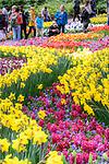 Visitors enjoying spring flower displays. Keukenhof Flower Gardens, Lisse, near Amsterdam, The Netherlands.