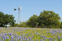 Bluebonnets and Windmill, Kingsland, Texas