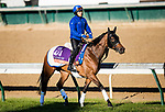 October 29, 2018 : Wild Illusion (GB), trained by Charlie Appleby, exercises in preparation for the Breeders' Cup Filly & Mare Turf at Churchill Downs on October 29, 2018 in Louisville, Kentucky. Evers/ESW/CSM