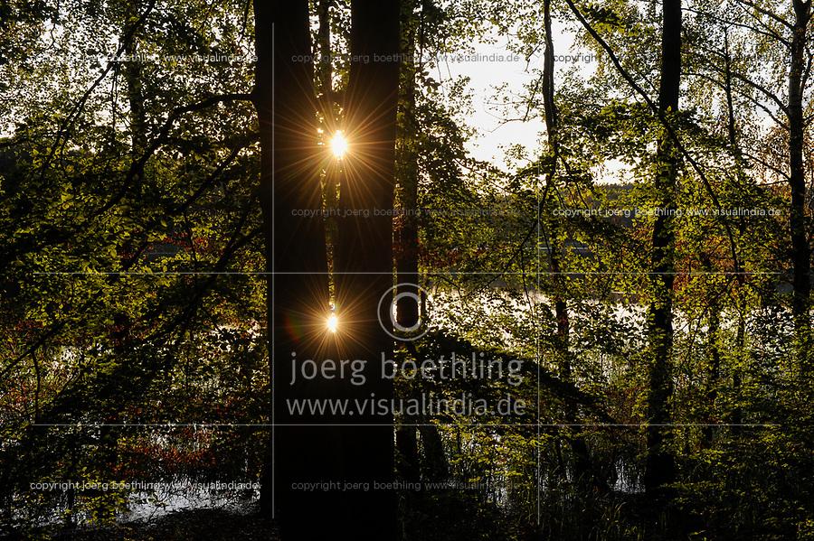 GERMANY, beech forest  with small lake / Mecklenburg-Vorpommern, intakter Wald, Laubwald mit Buchen und kleinem Waldsee