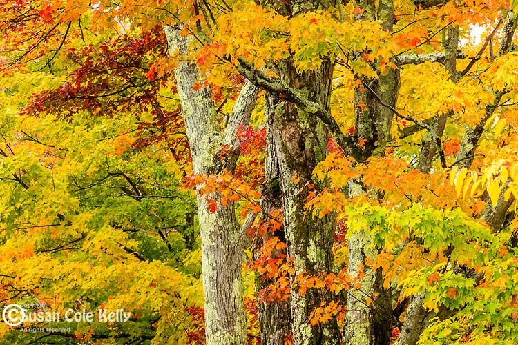 Fall foliage in Sugar Hill, New Hampshire, USA