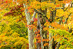 Fall foliage in Sugar Hill, New Hampshire, USA