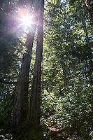 The late morning sun peeks through dense forest.