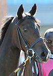 09 September 19: Redverse prior to the grade 3 Natalma Stakes for two year old fillies at Woodbine Racetrack in Rexdale, Ontario.
