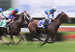 27 Sept 2008: Jockey Alan Garcia guides Dynaforce past the finish line for the first time en route to a wire-to-wire win in the Flower Bowl Invitational Stakes at Belmont Park in Elmont, New York on Jockey Club Gold Cup Day.
