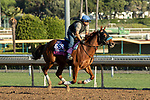 ARCADIA, CA  OCTOBER 26: Breeders' Cup Juvenile Turf Sprint entrant Fair Maiden, trained by Eoin G. Harty, exercises in preparation for the Breeders' Cup World Championships at Santa Anita Park in Arcadia, California on October 26, 2019. (Photo by Casey Phillips/Eclipse Sportswire/CSM)