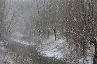 Schnee, Schneefall, es schneit, Schneeflocke, Schneeflocken, Schneetreiben im Winter, Snow, snowfall, snowflake, snowflakes, snow in winter