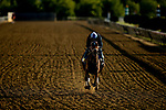 MAY13, 2021: Adventuring gallops in preparation for the Black eyed Susan Stakes at Pimlico Race Course in Baltimore, Maryland on May 13, 2021. EversEclipse Sportswire/CSM
