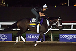 DEL MAR, CA - NOVEMBER 01: Forever Unbridled, owned by Charles E. Fipke and trained by Dallas Stewart, exercises in preparation for Longines Breeders' Cup Distaff during morning workouts at Del Mar Thoroughbred Club on November 1, 2017 in Del Mar, California. (Photo by Michael McInally/Eclipse Sportswire/Breeders Cup)