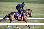 Glass Slippers, trained by trainer Kevin A. Ryan, exercises in preparation for the Breeders' Cup Turf Sprint at