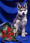 Xavier, ANIMALS, REALISTISCHE TIERE, ANIMALES REALISTICOS, dogs, photos+++++,SPCHDOGS1026,#a#, EVERYDAY