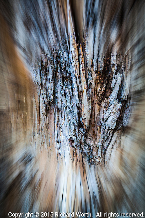 Abstract impression  of a eucalyptus.