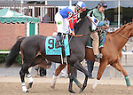 Halo Dolly, ridden by Joel Rosario, runs in the Flower Bowl Invitational Stakes (GI) at Belmont Park in Elmont, New York on September 29, 2012.  (Bob Mayberger/Eclipse Sportswire)
