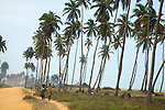 Fishing villages co-mingled with tall palm trees line the beach between Benin's capital of Cotonou and the historic town of Ouidah.  Women walk along the dirt road that connects Cotonou and Ouidah, carrying food and belongings on their heads.