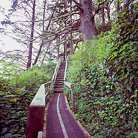 Boardwalk Trail along Pacific West Coast of Vancouver Island, near Ucluelet, BC, British Columbia, Canada