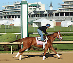 April 23, 2014 My Miss Sophia jogs at Churchill Downs in preparation for the Kentucky Oaks.  She is owned by Mathis Stable LLC and trained by Todd Pletcher.  She was the winner of the Gazelle Stakes at Oaklawn Park.