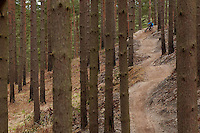 Steve riding the blue trail;  Swinley Forest ,  opening of the new trails  , May  2013.      pic copyright Steve Behr / Stockfile