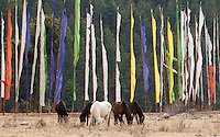 Horses in front of prayer flags, Bumthang, Bhutan