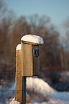 Bluebird house covered with snow