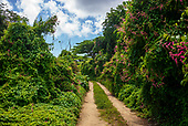 Vieques, Puerto Rico<br /> September 7, 2021<br /> <br /> The rain forests in western Vieques island.