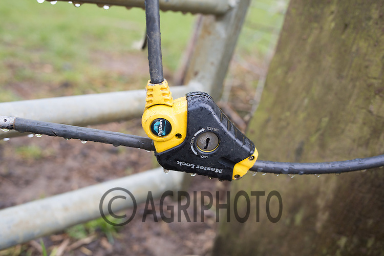 Padlock on a gate to a livestock field<br /> Picture Tim Scrivener 07850 303986 tim@agriphoto.com<br /> ….covering agriculture in the UK….
