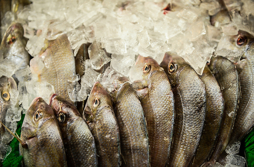 Store fish display.