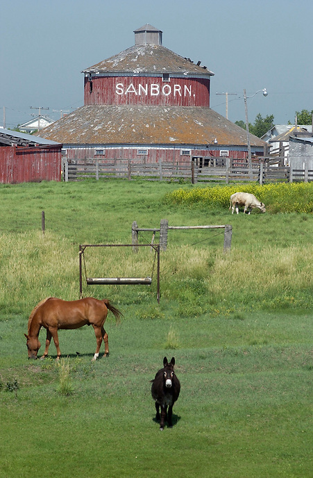 A donkey, a horse, a cow and a round red barn near Drinkwater, Sask. MARK TAYLOR GALLERY