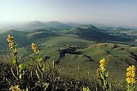 Europe/France/Auvergne/63/Puy-de-Dôme/PArc Naturel Régional des Volcans/Les monts Dômes: gentianes vu depuis le Puy-de-Dôme (1465 mètres)